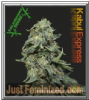 Kalashnikov Kabul Express Female 3 Weed Seeds